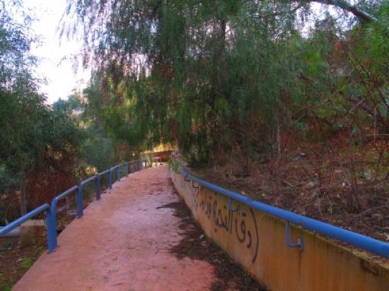 View showing graffiti along a retaining wall in the park   لقطة تبين كتابات على جدار إستنادي في الحديقة