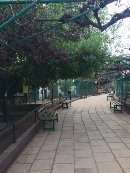 View of a shaded seating area in the park taken from the east   لقطة لمساحة مظللة للجلوس في الحديقة مأخوذة من الشرق