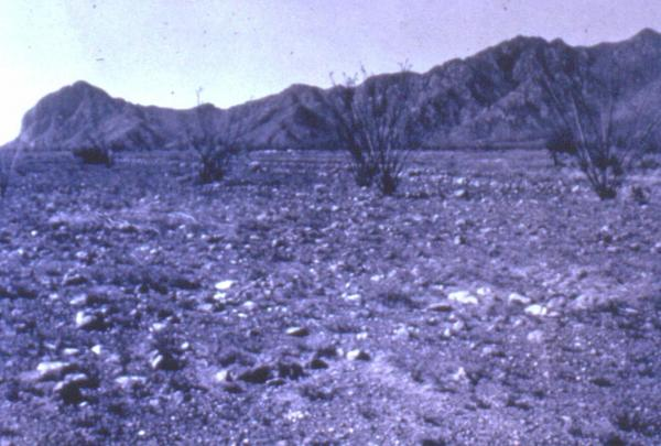 Fig. 5: An image from the 1950s showing an area outside Tucson where the plant community was destroyed as a result of over-grazing.