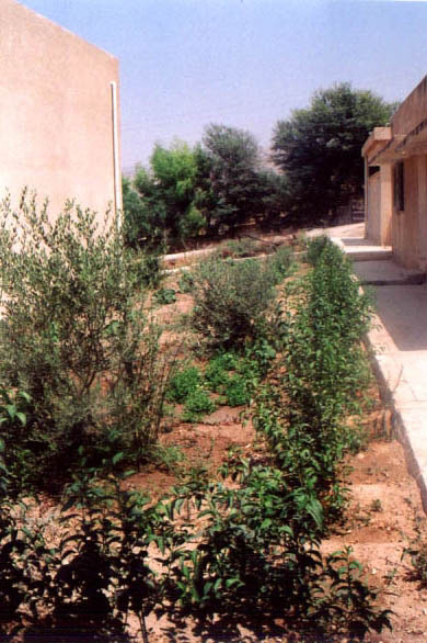 Figure 19: Irrigated area at Adasiyyah Girls' School.