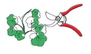 pruning (image credit: Dalia al-Husseini)