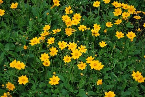 Image source:http://flower.onego.ru/other/phlox/en_2796.jpg