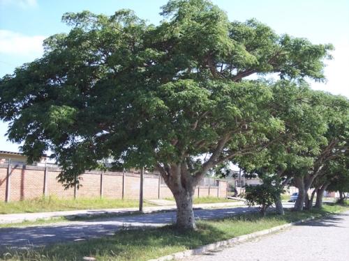Image source:http://www.naturezabela.com.br