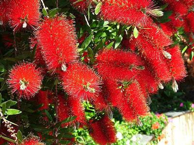 Image source:http://treesplanet.blogspot.com/