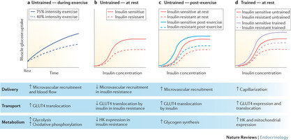 Sylow, Lykke et al., (2016) - Exercise-stimulated glucose uptake — regulation and implications for glycaemic control