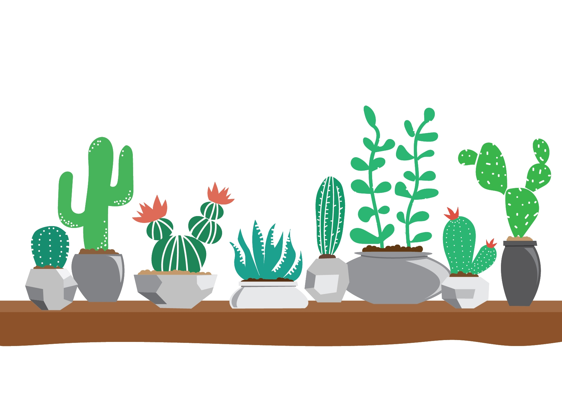 I have a small obsession with cacti.
