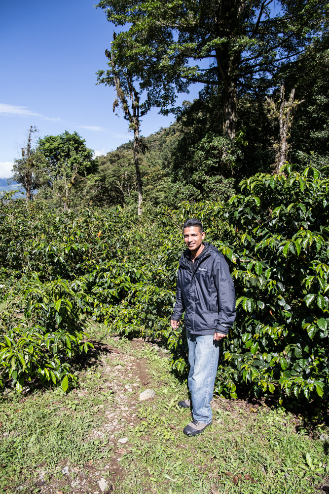 Boquete Coffee Tour