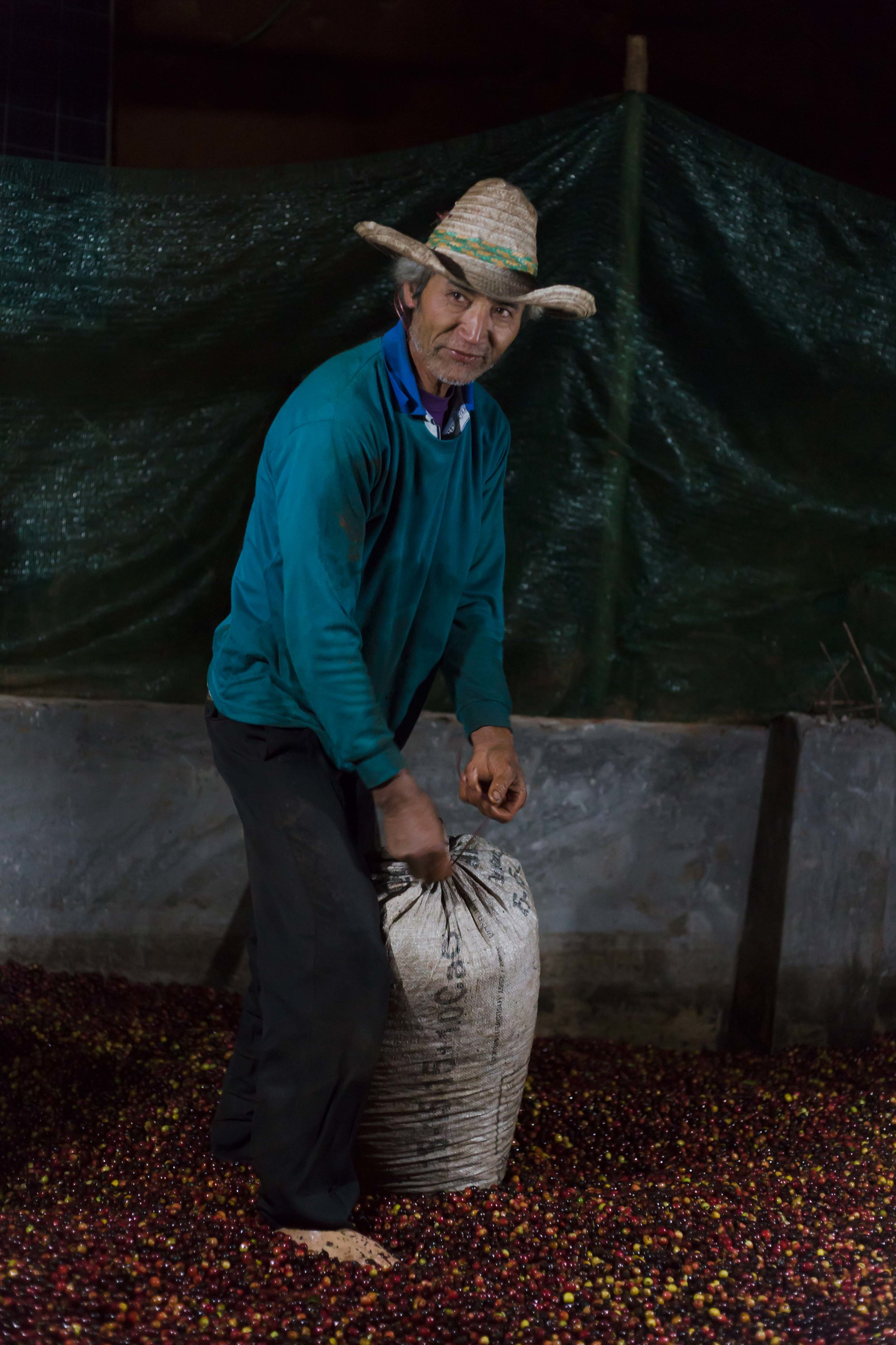 Coffee cherry processing starts in the evening straight after being harvested