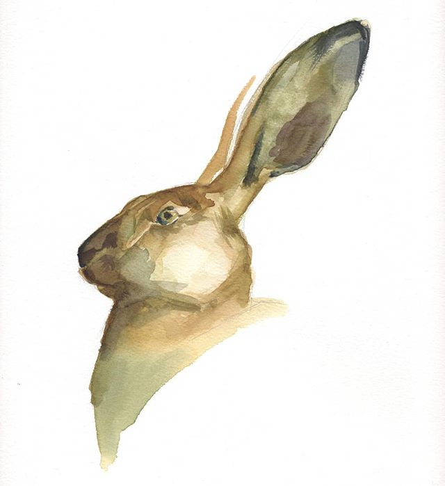 Watercolor hare portrait  #watercolor #hare #animalart #wildlife