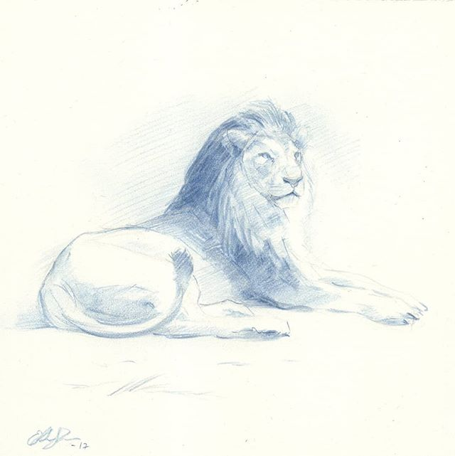Lion study in blue 1  #drawing #lion #blue #Prismacolor #wildlife #animalart