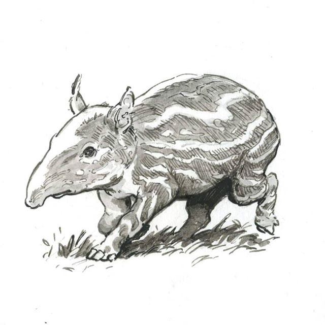 Baby tapir  #ink #tapir #bouncy #pen #animalart #wildlifeart #drawing #Turingpattern