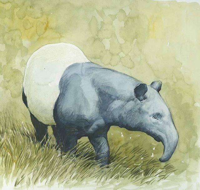 Malayan tapir #watercolor #tapir #tapirthursday #stompy #fabulous #animalart #wildlifeart