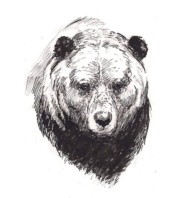 Bear #ink #bear #contemplative #animalart #wildlifeart #drawing #traditionalart