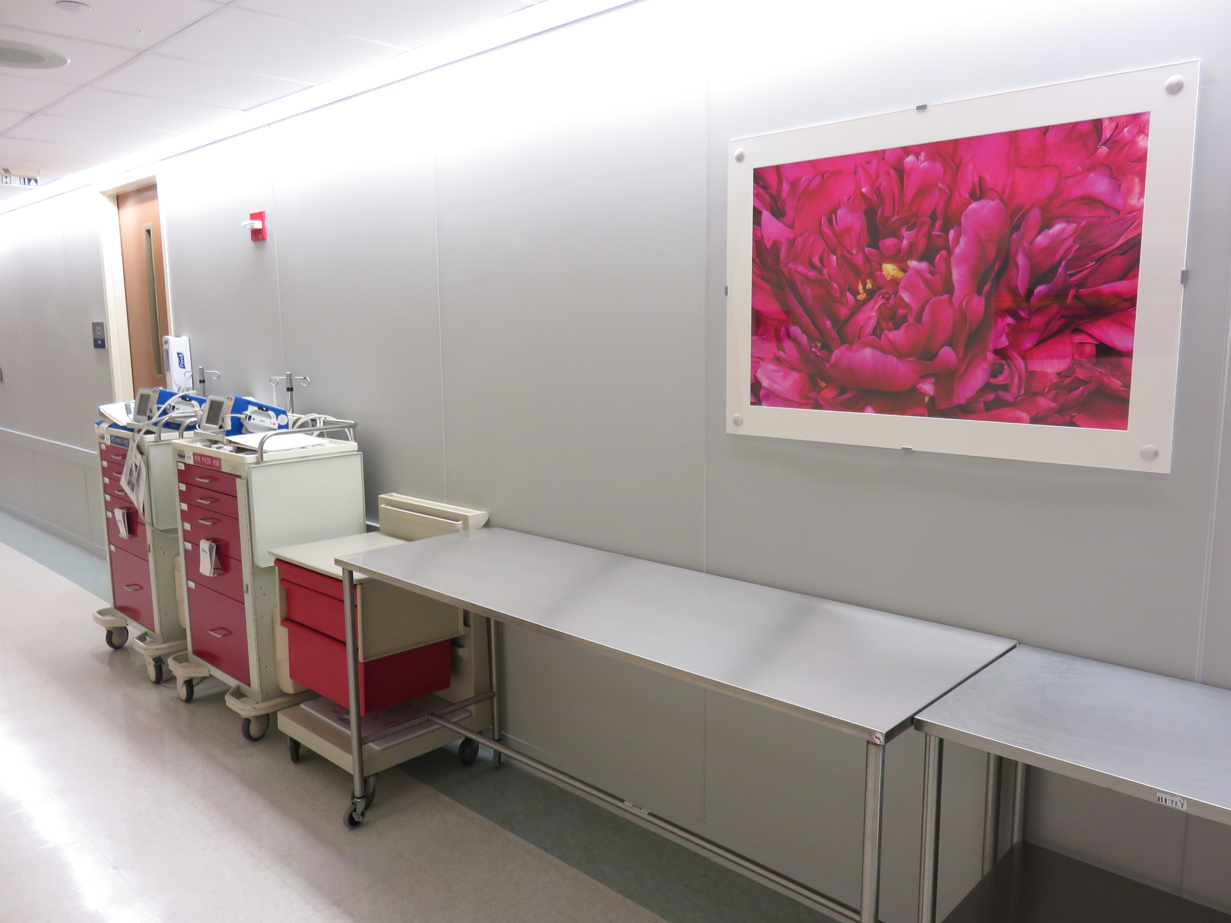"My large photo (36x24) ""Peony"" exhibited at Westchester Medical Center"