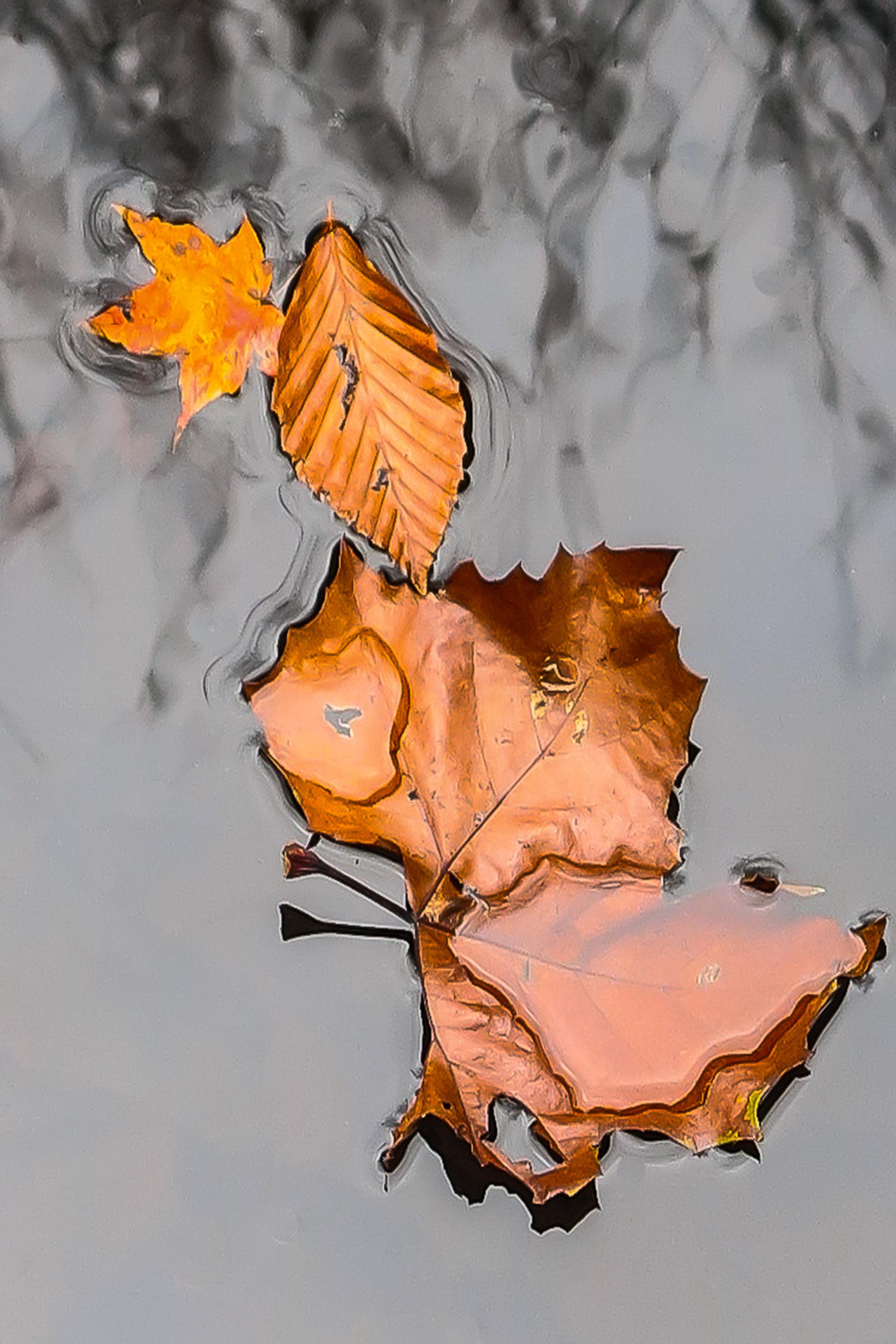 Fallen Leaves 1105