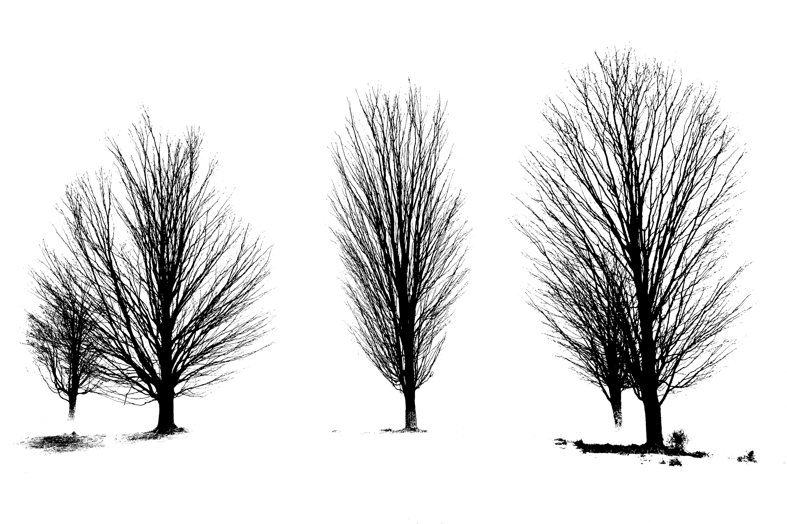 Trees in Ink 1125