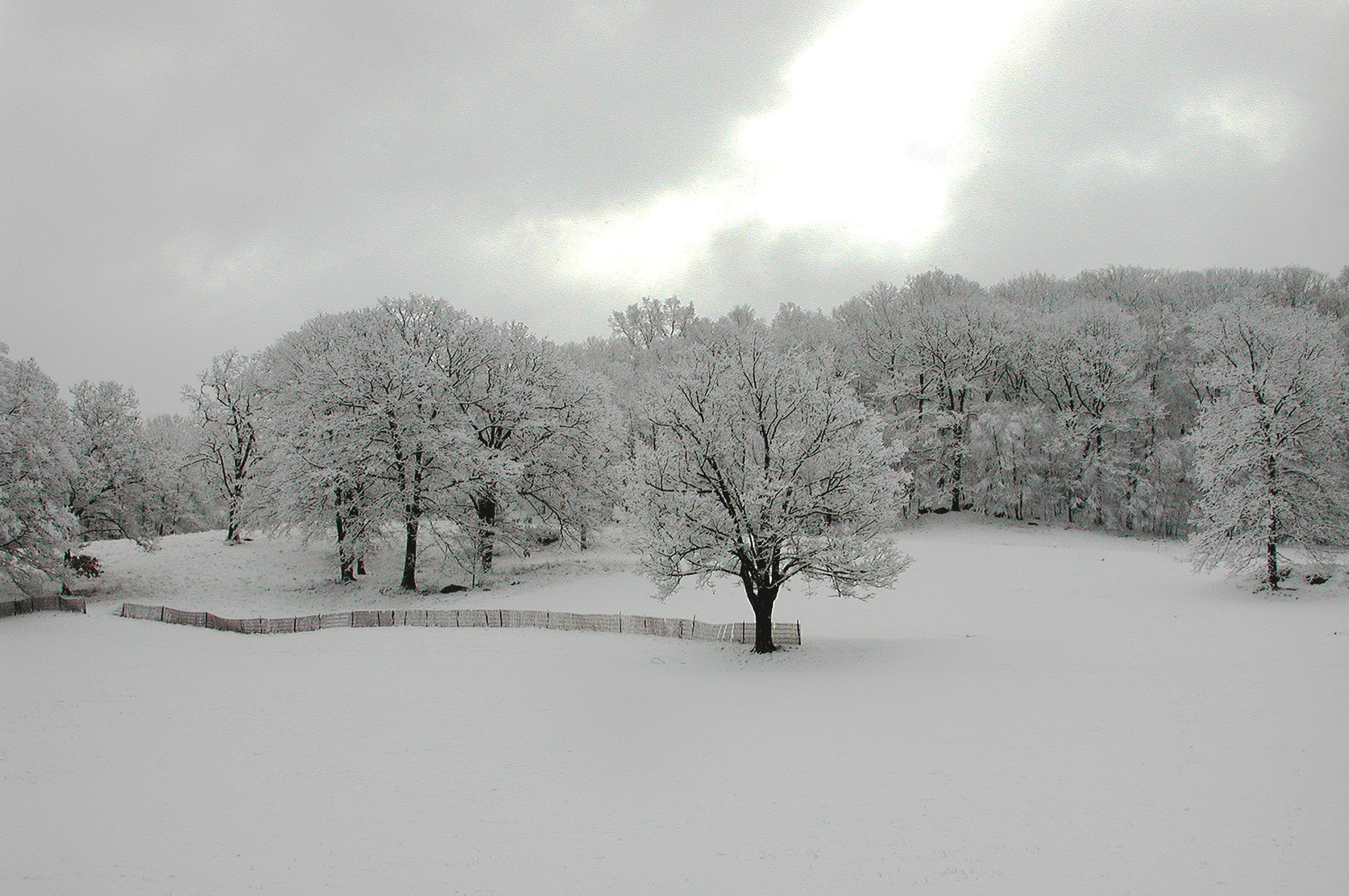 Trees in Ice 1016