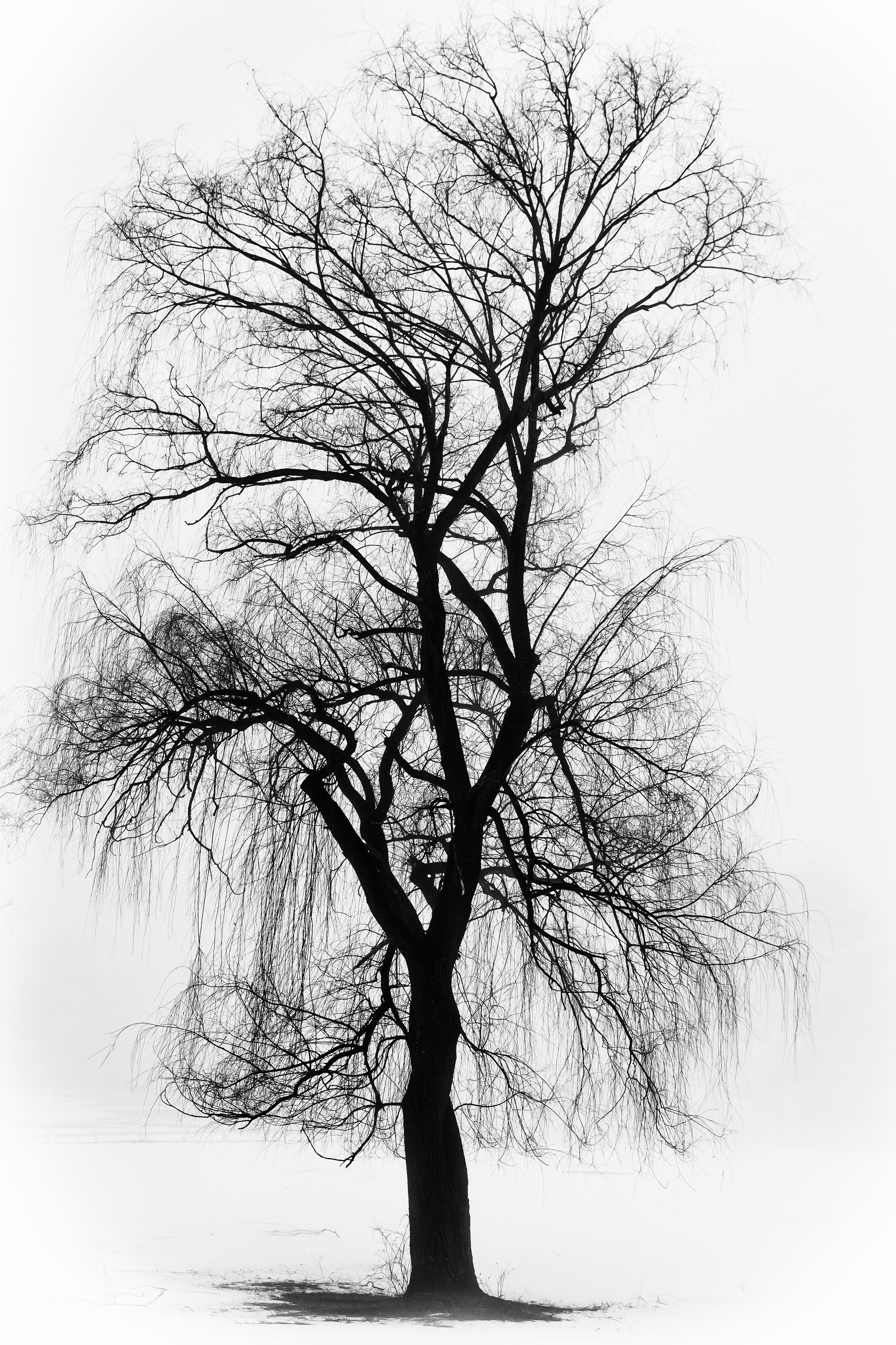 Winter Willow 1026