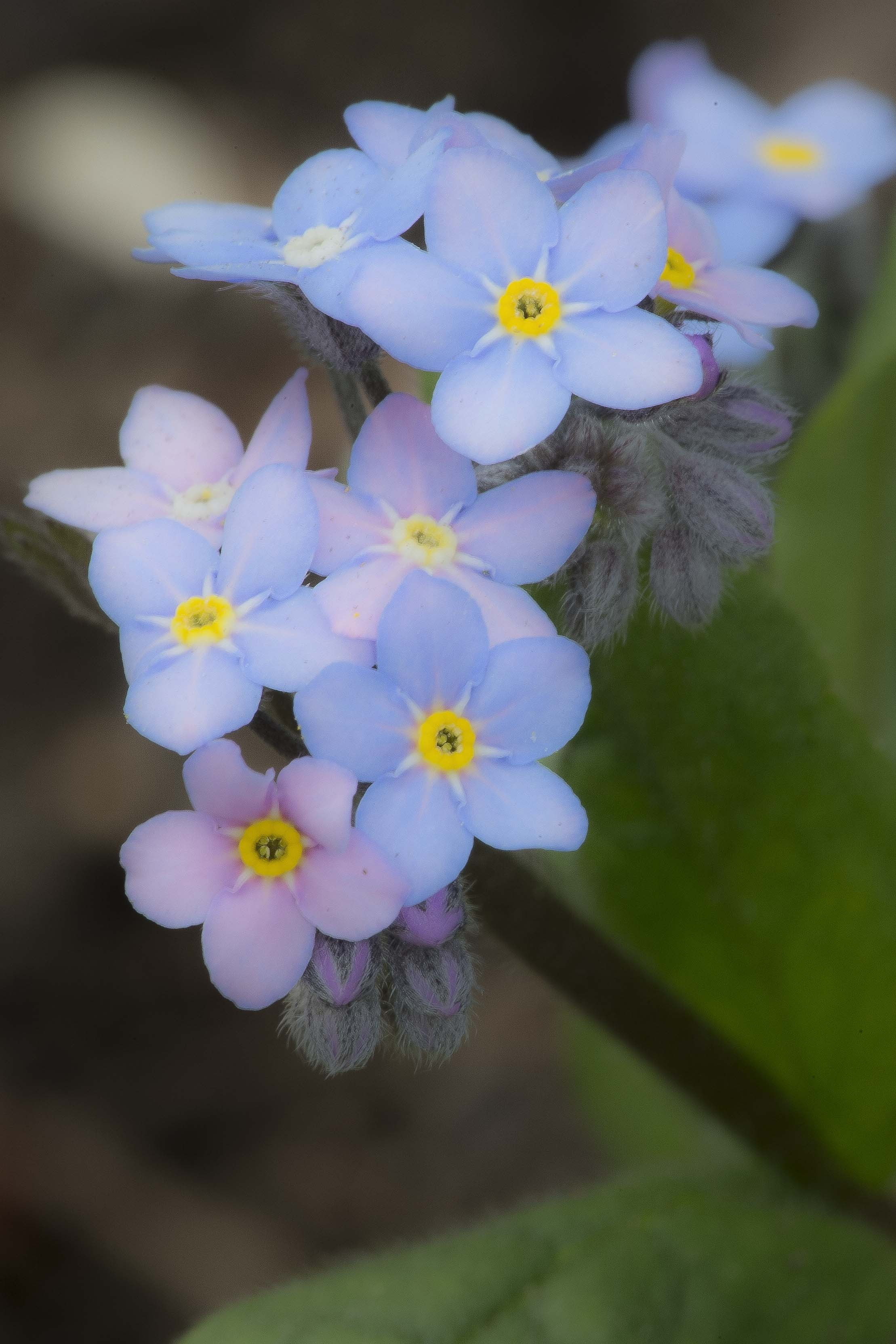 Spring Flowers 1180