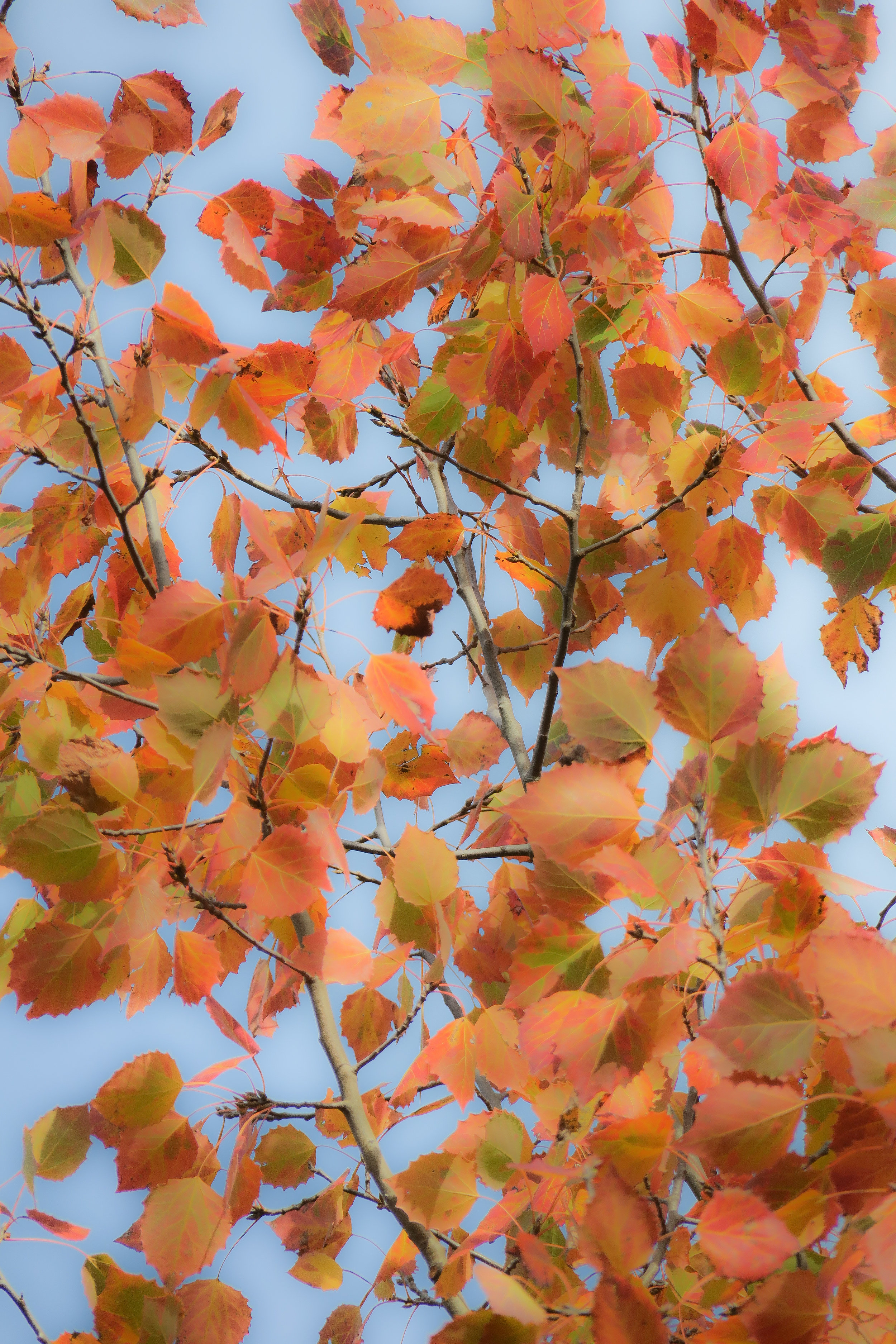October Leaves 1163