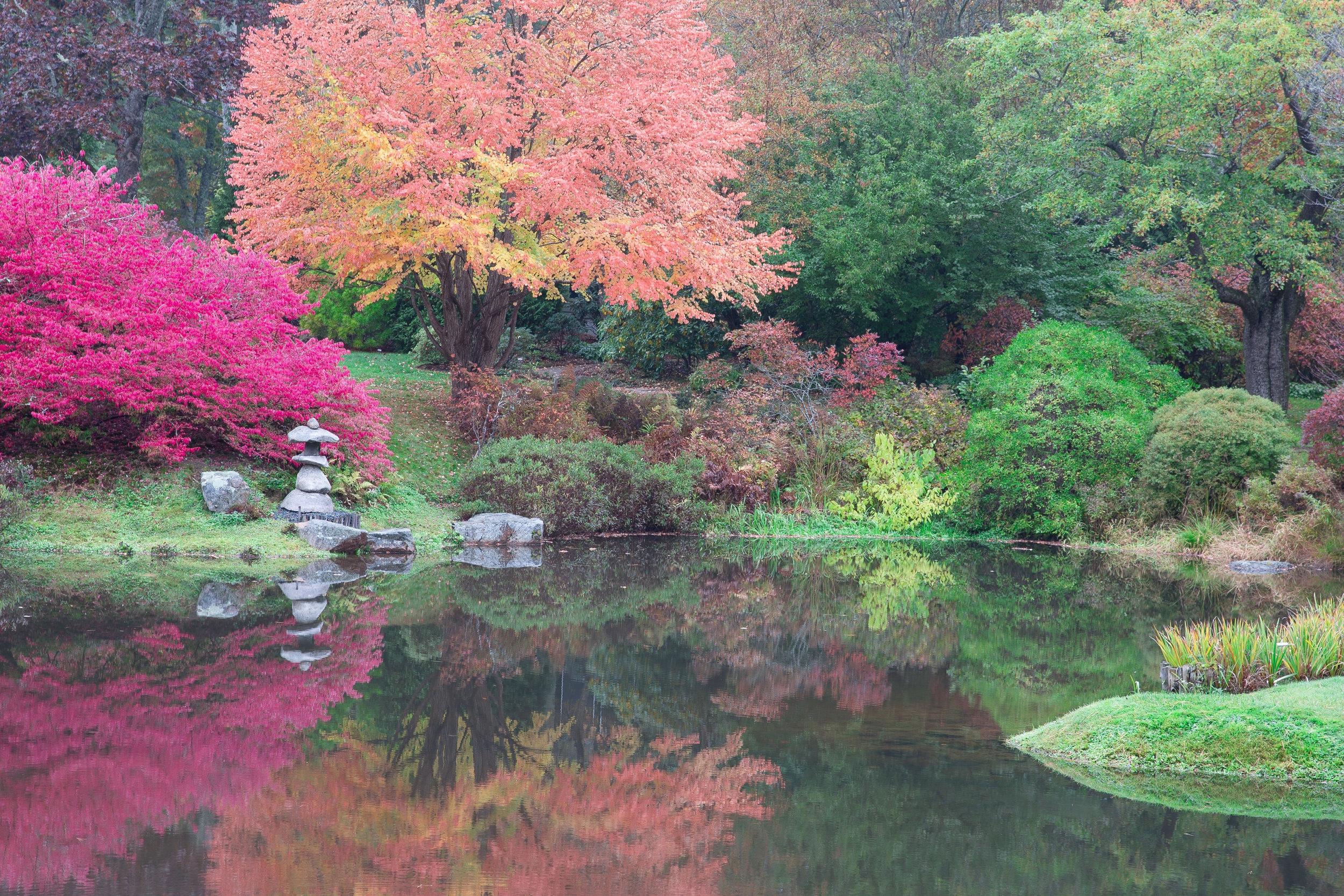 Asticou Garden Reflections 1160