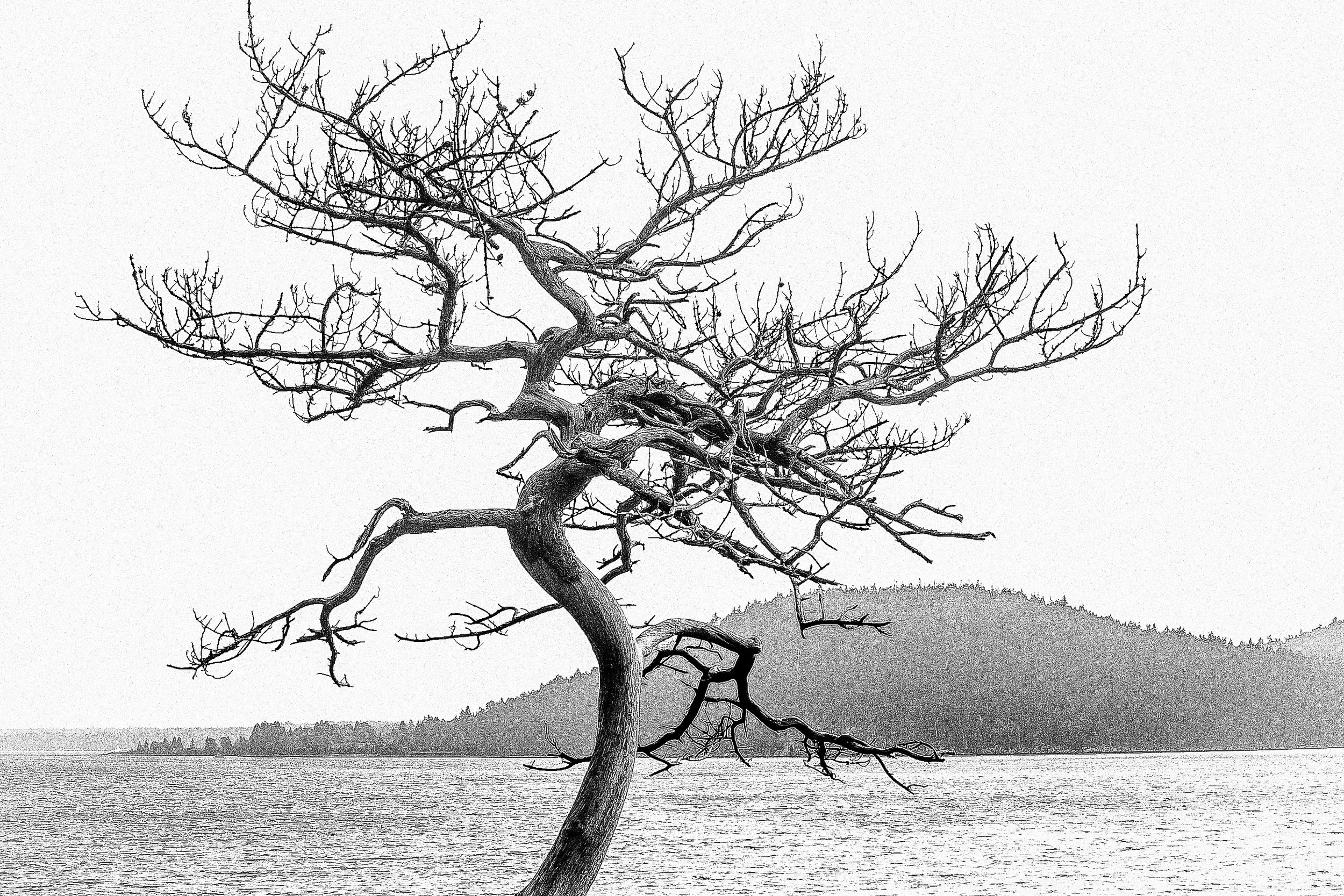 Twisted Tree 1098