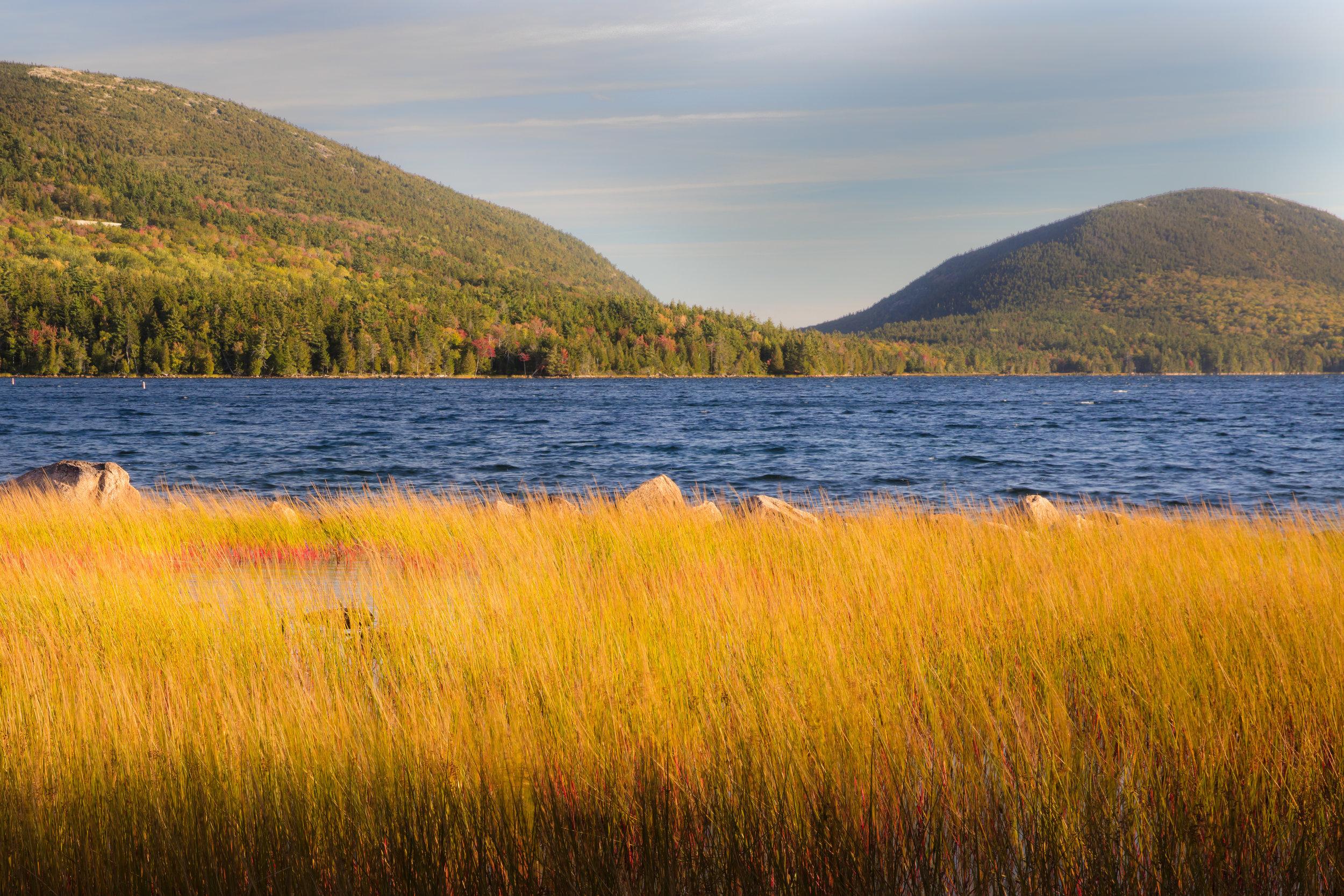 Eagle Lake Reeds