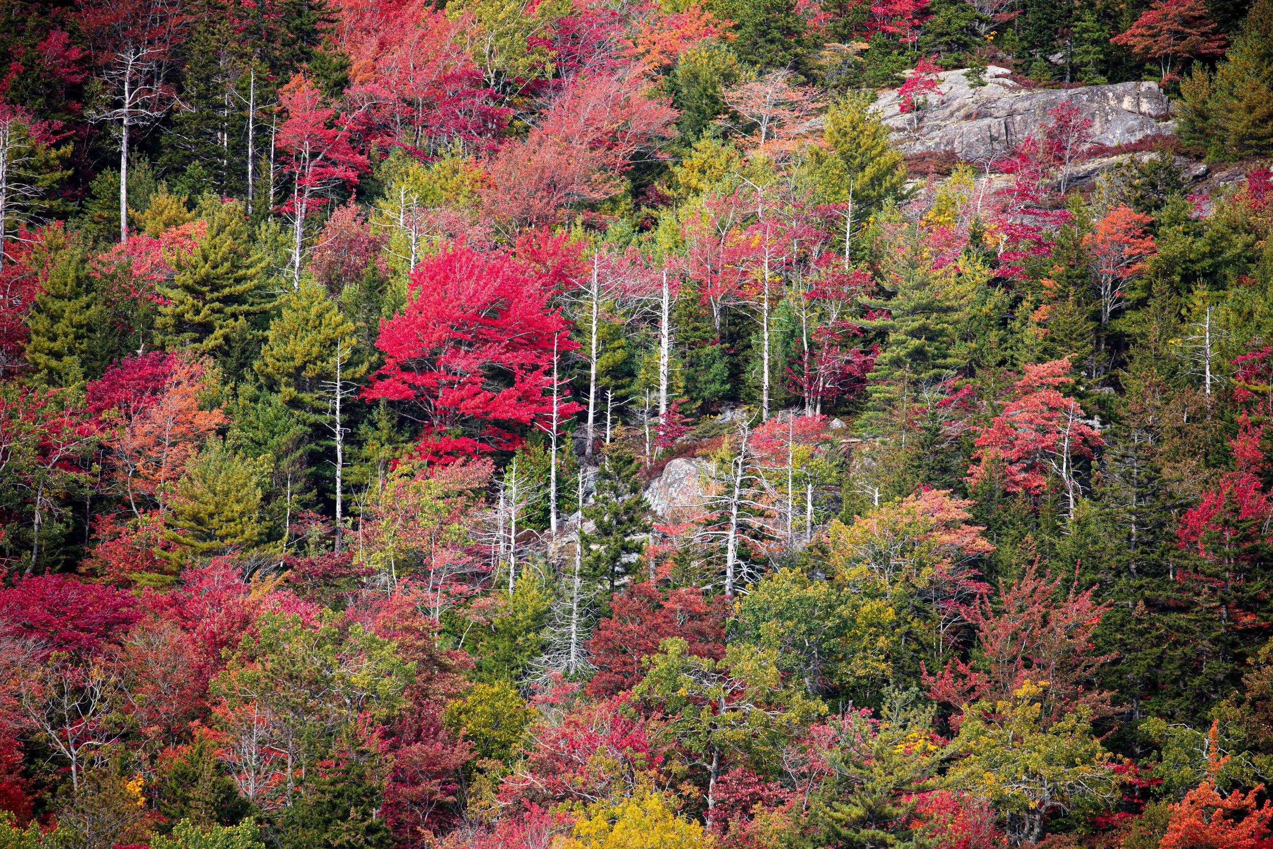 Beech Mountain Color