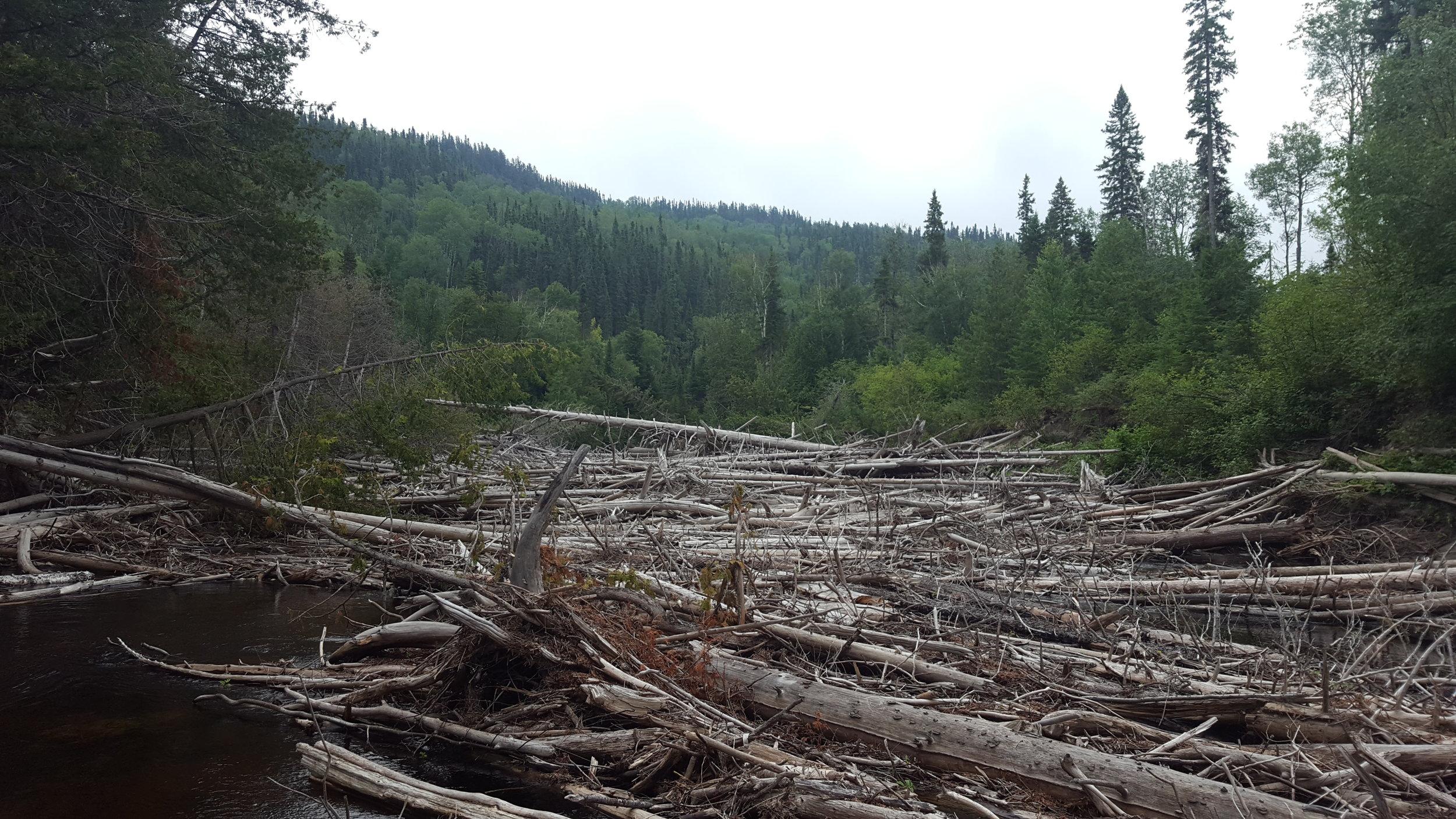 Log Jam on the Steel River