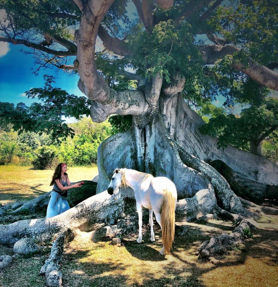 Robin playing kalimba under Ceiba Tree full sizejpg.jpg