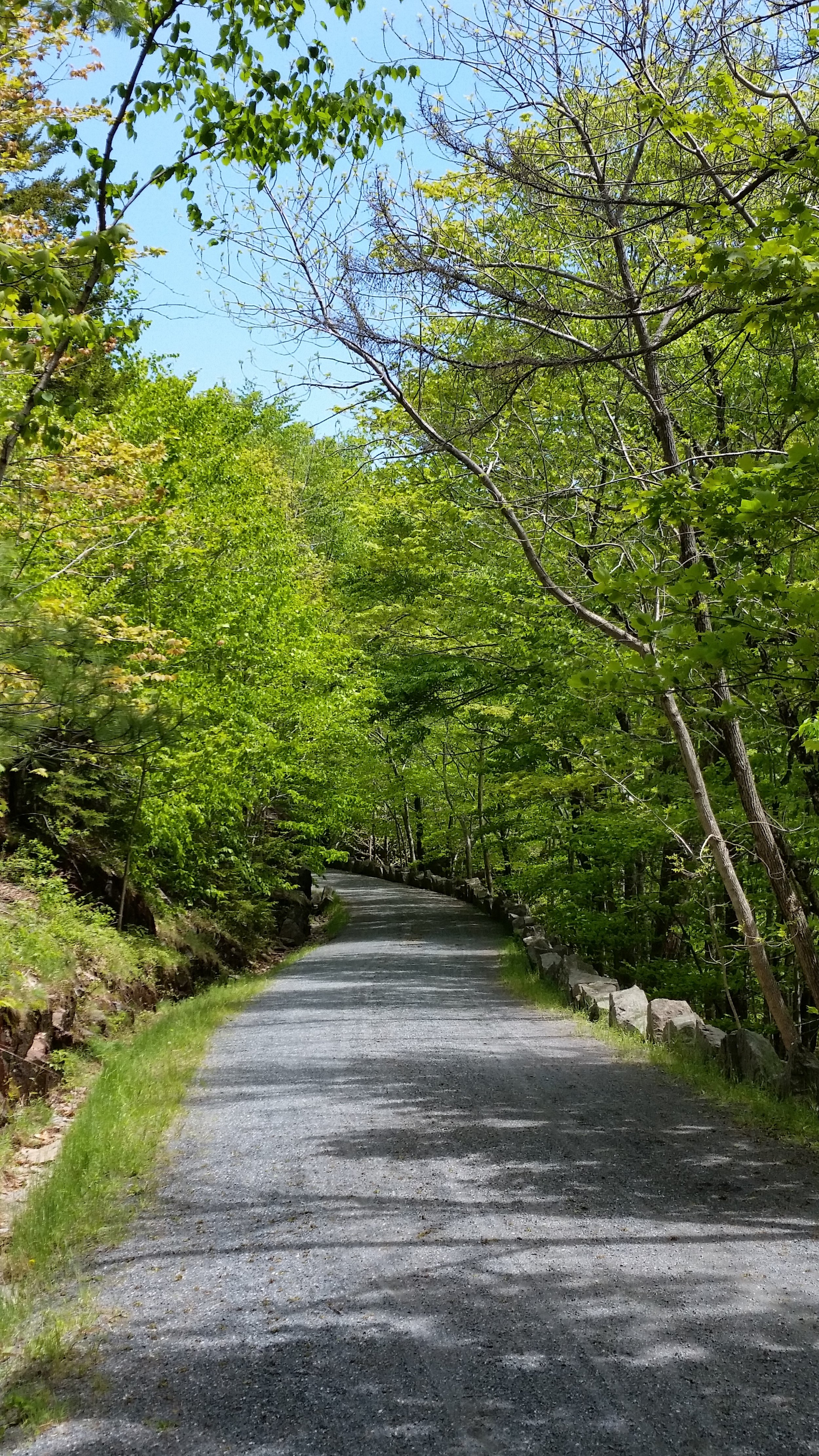 Carriage Road, Acadia National Park, ME