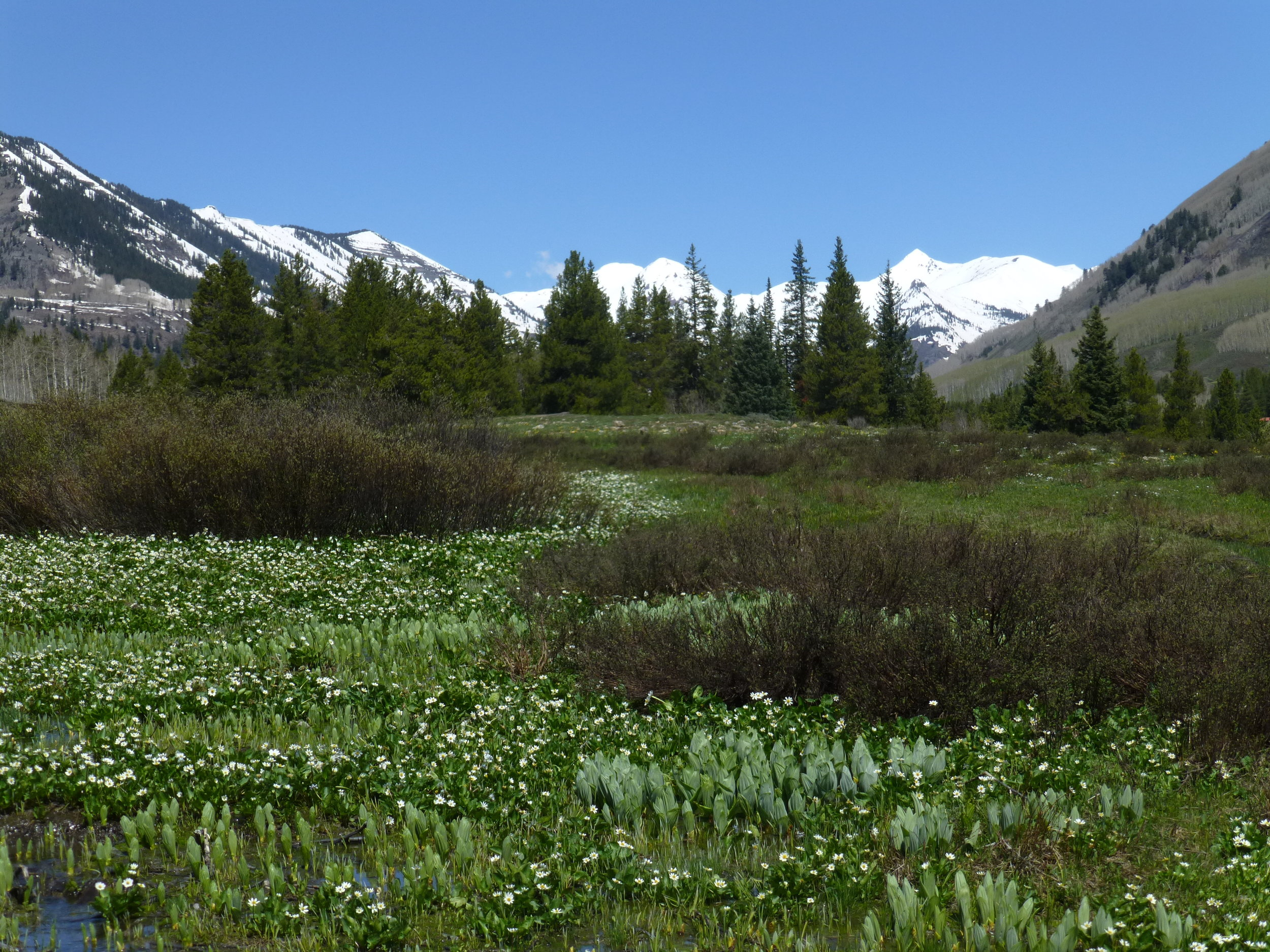 Slate River Valley, Crested Butte
