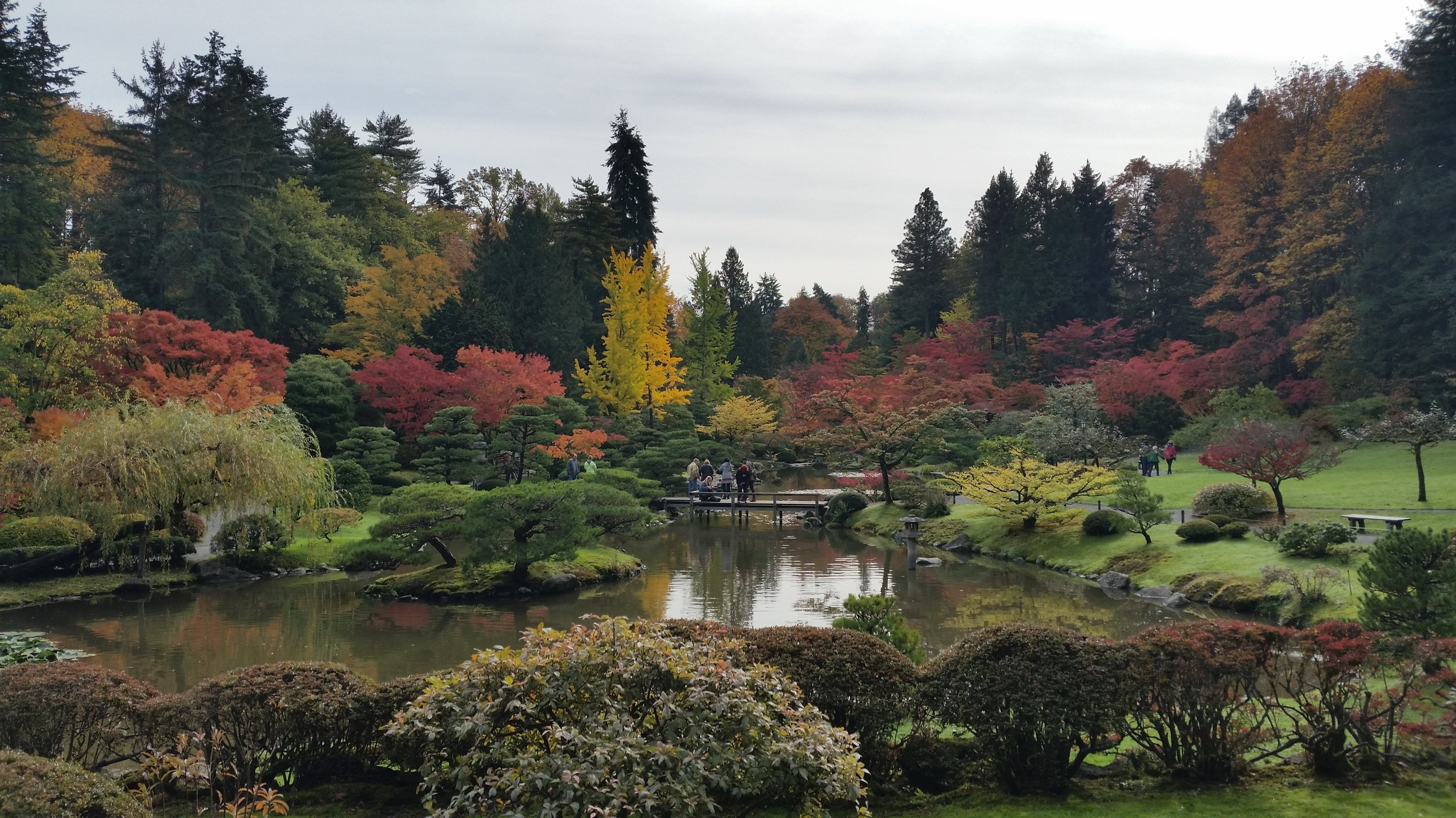 Fall color in the Seattle Japanese Garden