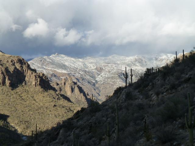 West section of Saguaro National Park, AZ