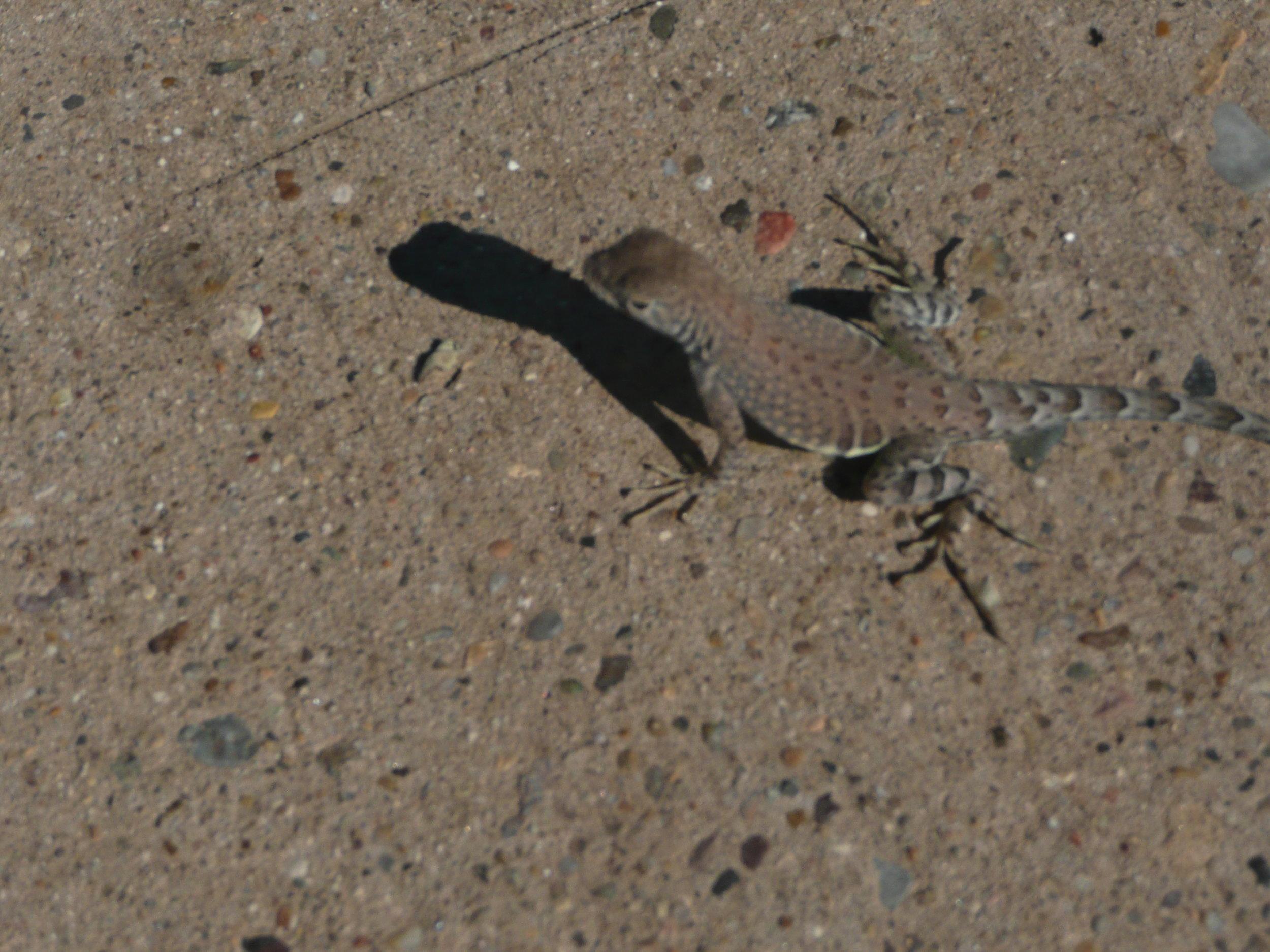 Wildlife in Big Bend National Park