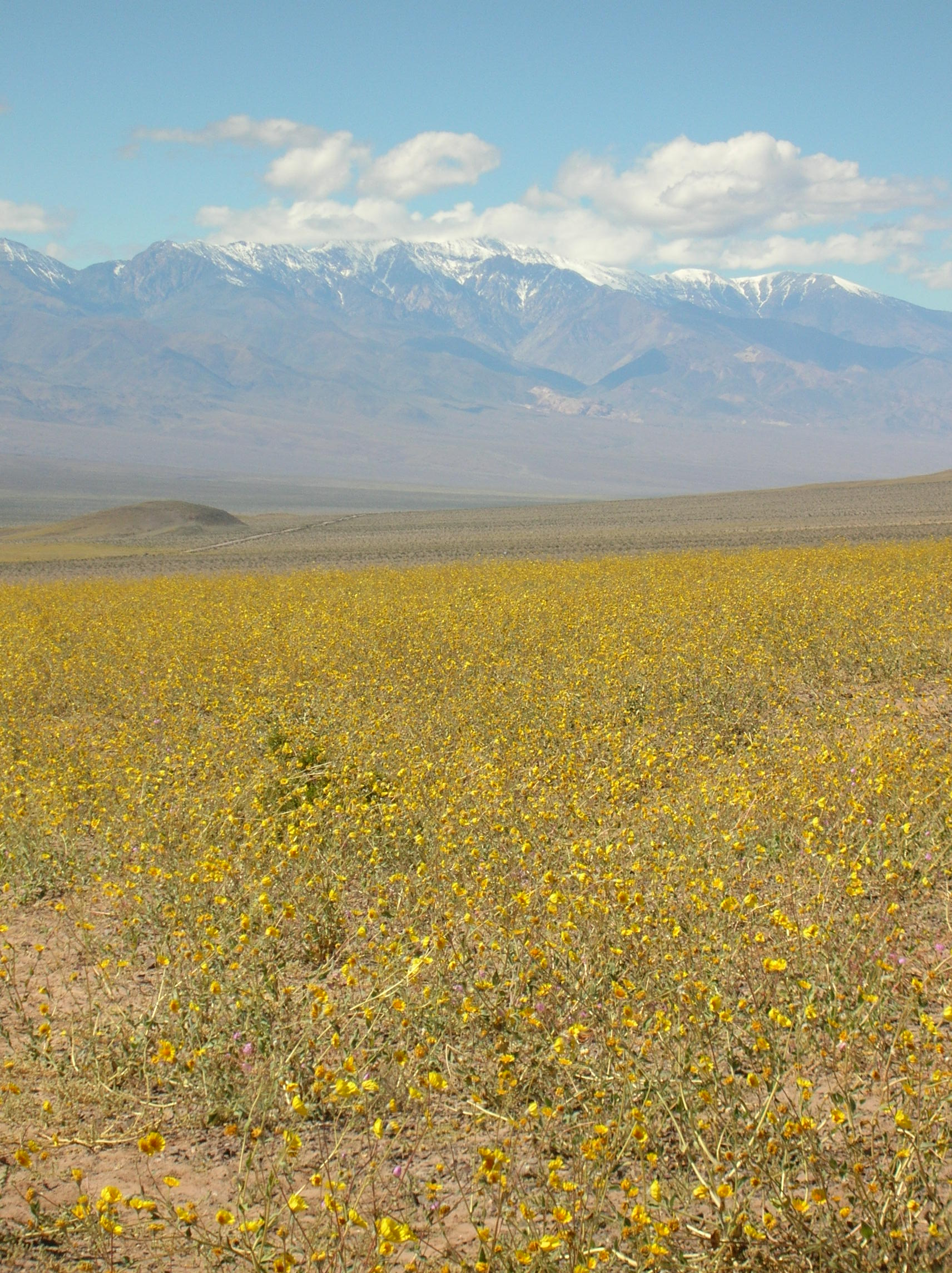 Super bloom in Death Valley National Park
