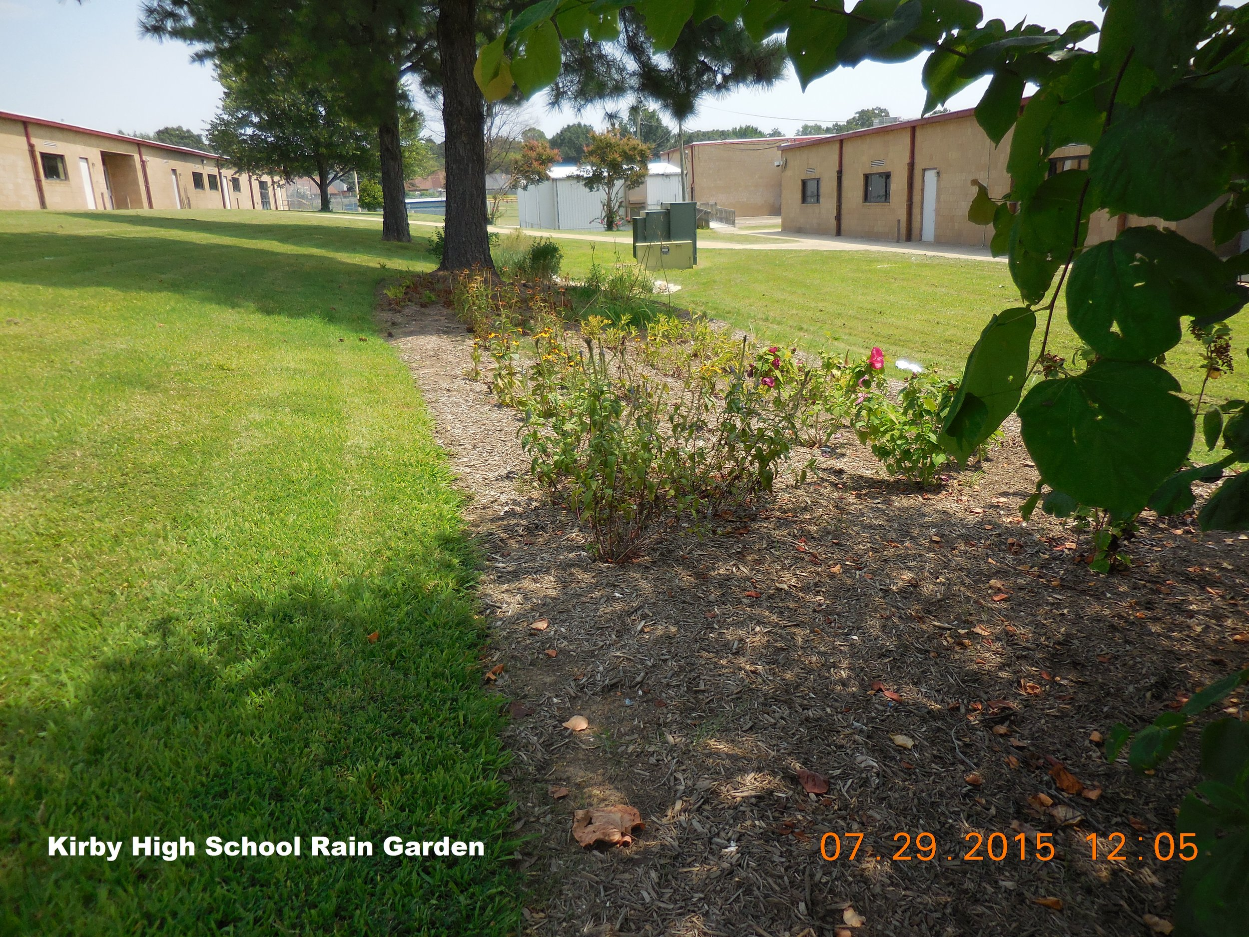 """One of the 3 original rain gardens after initial installation at Kirby High School. Since then, """"Project Rain Garden"""" has evolved with the goal of installing 3 rain garden per year at schools who are interested in maintaining and utilizing the gardens to educate children and the community."""