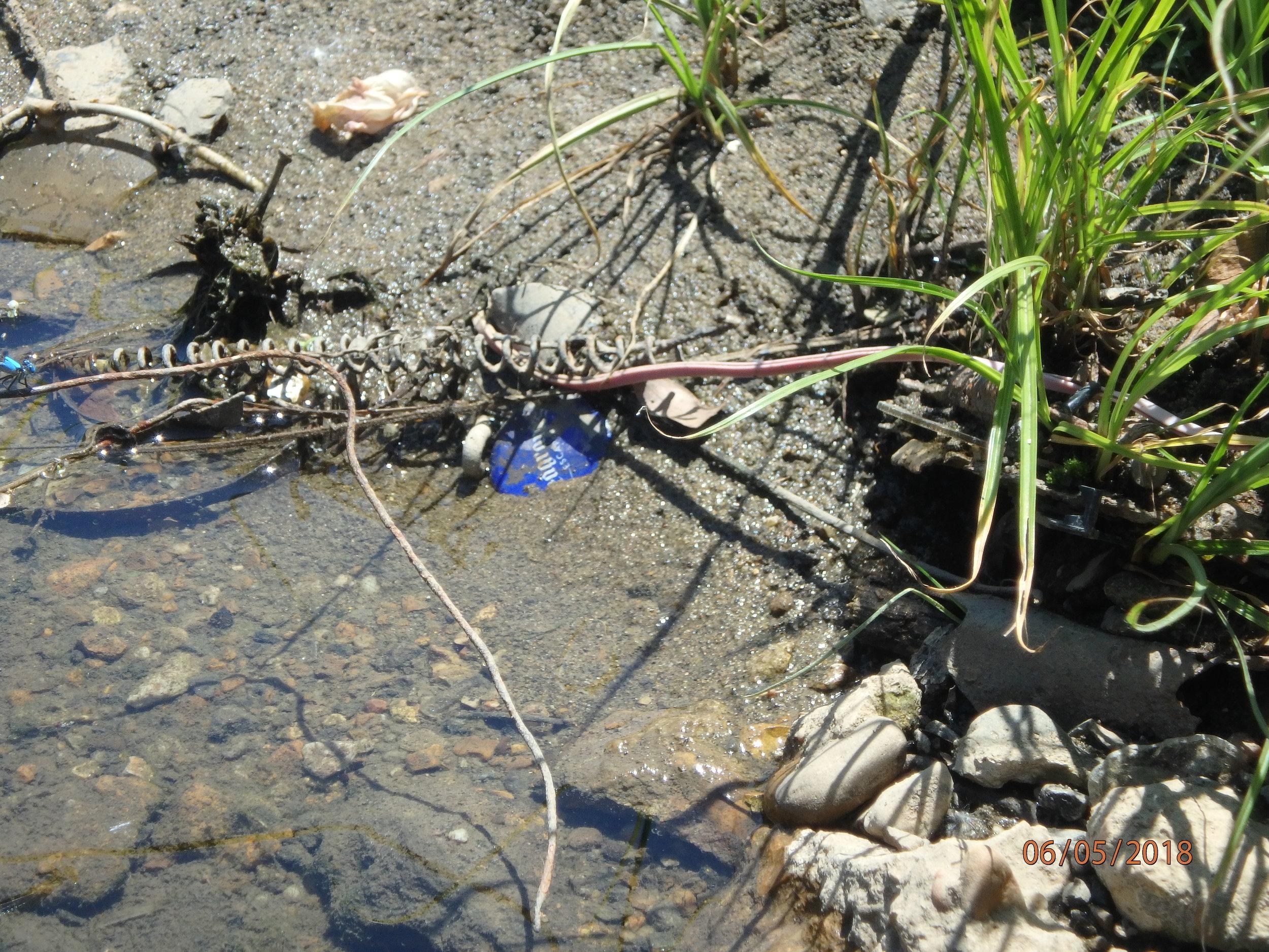 2018 Day 2, Group 1 : Cypress Creek Sampling
