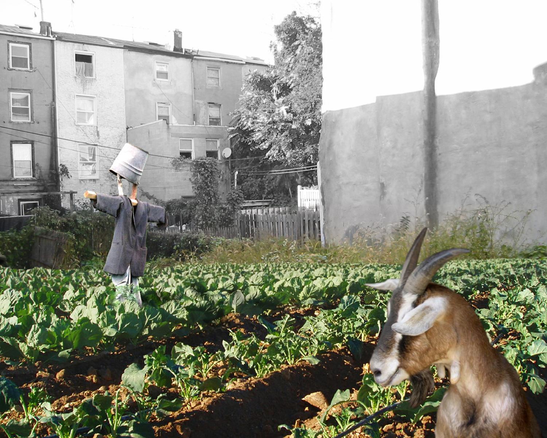 03_Farma_cabbage-garden.jpg