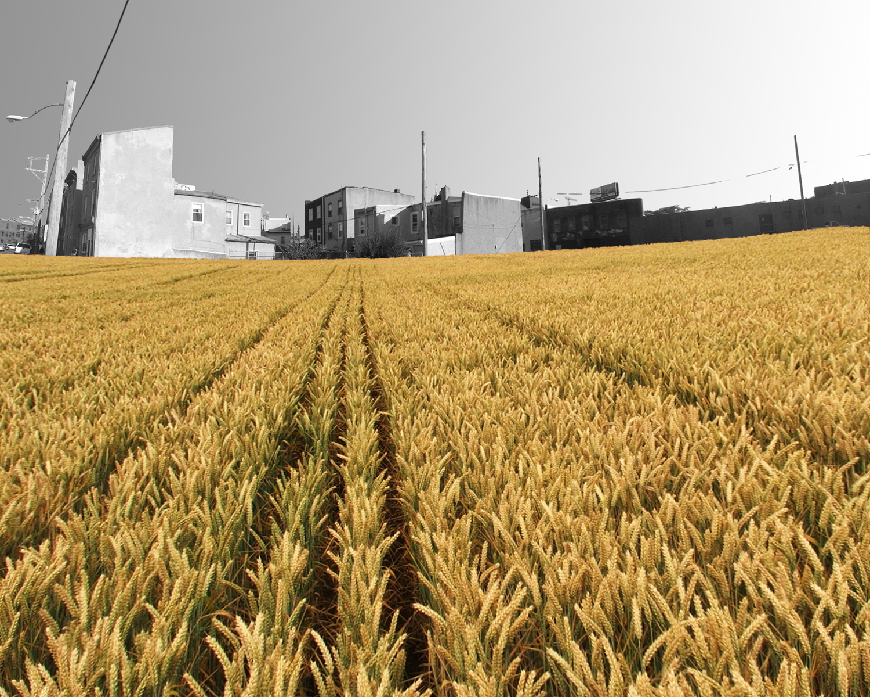 02_Farma_wheat-field.jpg