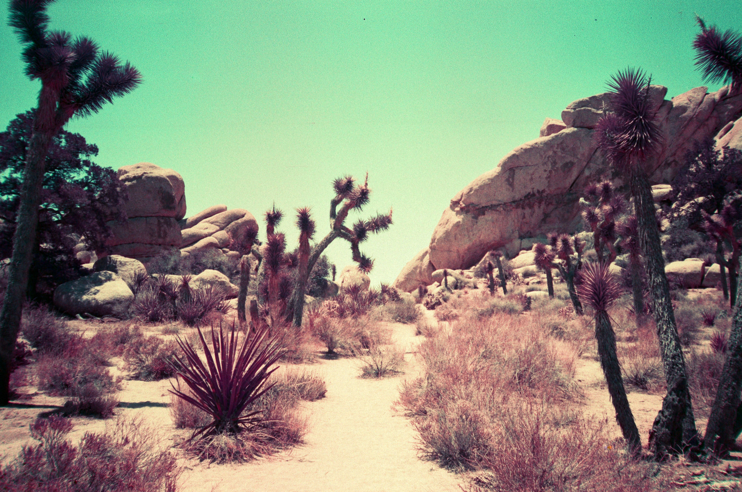 LomoChrome Purple - Cali - 10.jpg