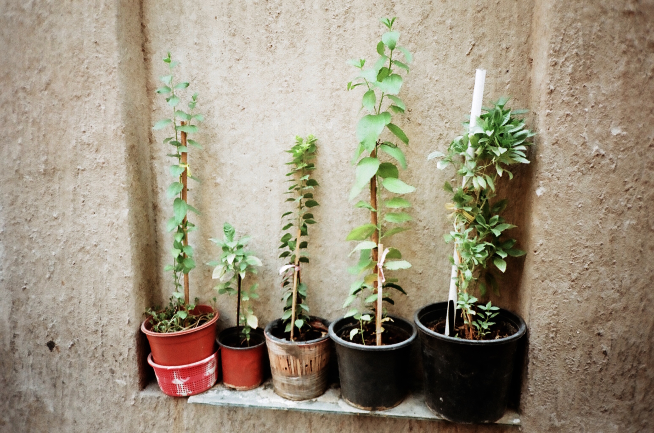 plants AS models