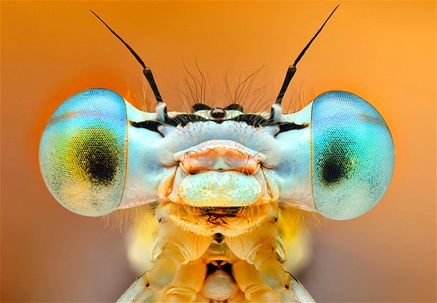 insect eyes1.jpg