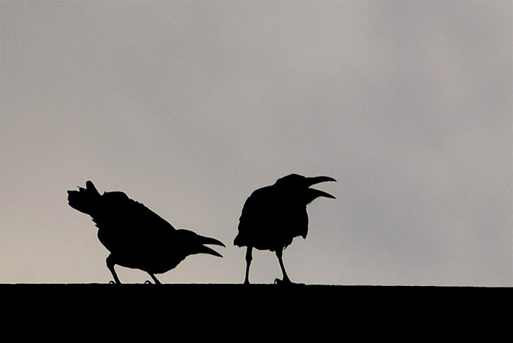 Photo 'Heckle & Jekyll' by Eyal Shochat.