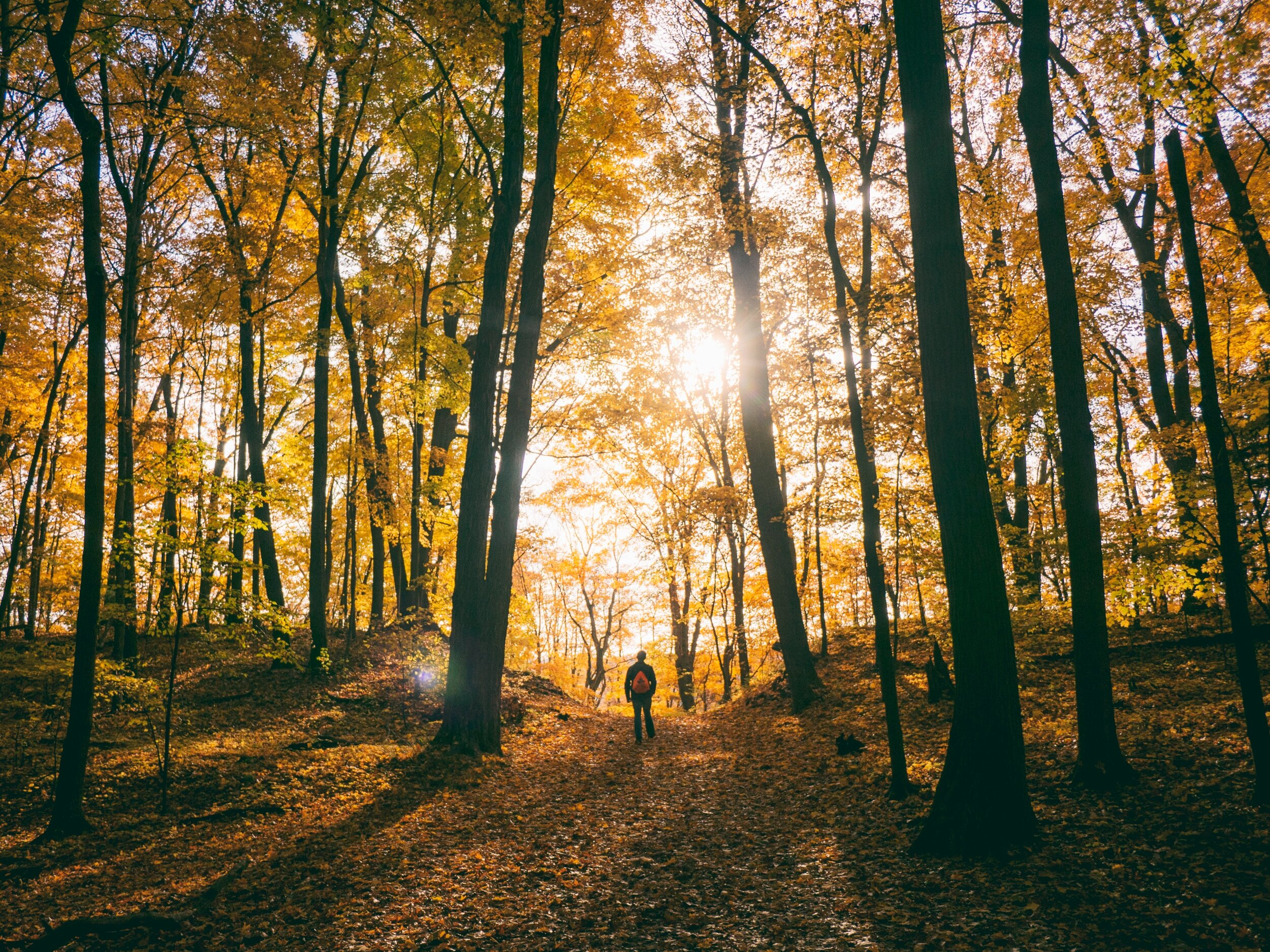 How Nature is Good for Our Health & Happiness    The mighty outdoors is a wondrous place to explore and it has more health benefits than staying cooped up inside.