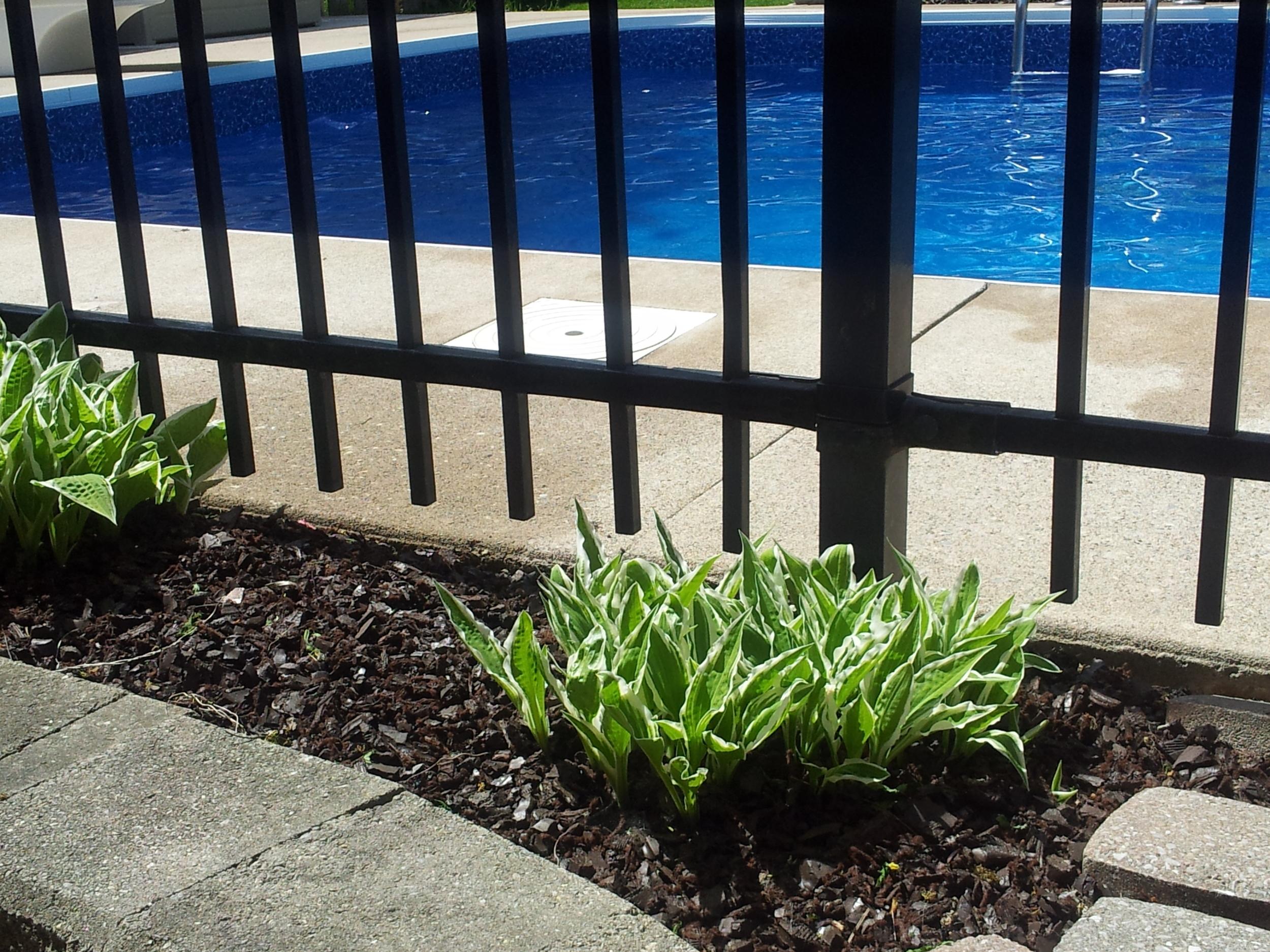 poolside mulch.jpg