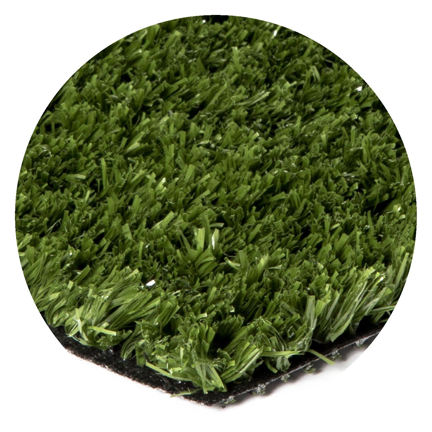BENT GRASS 30
