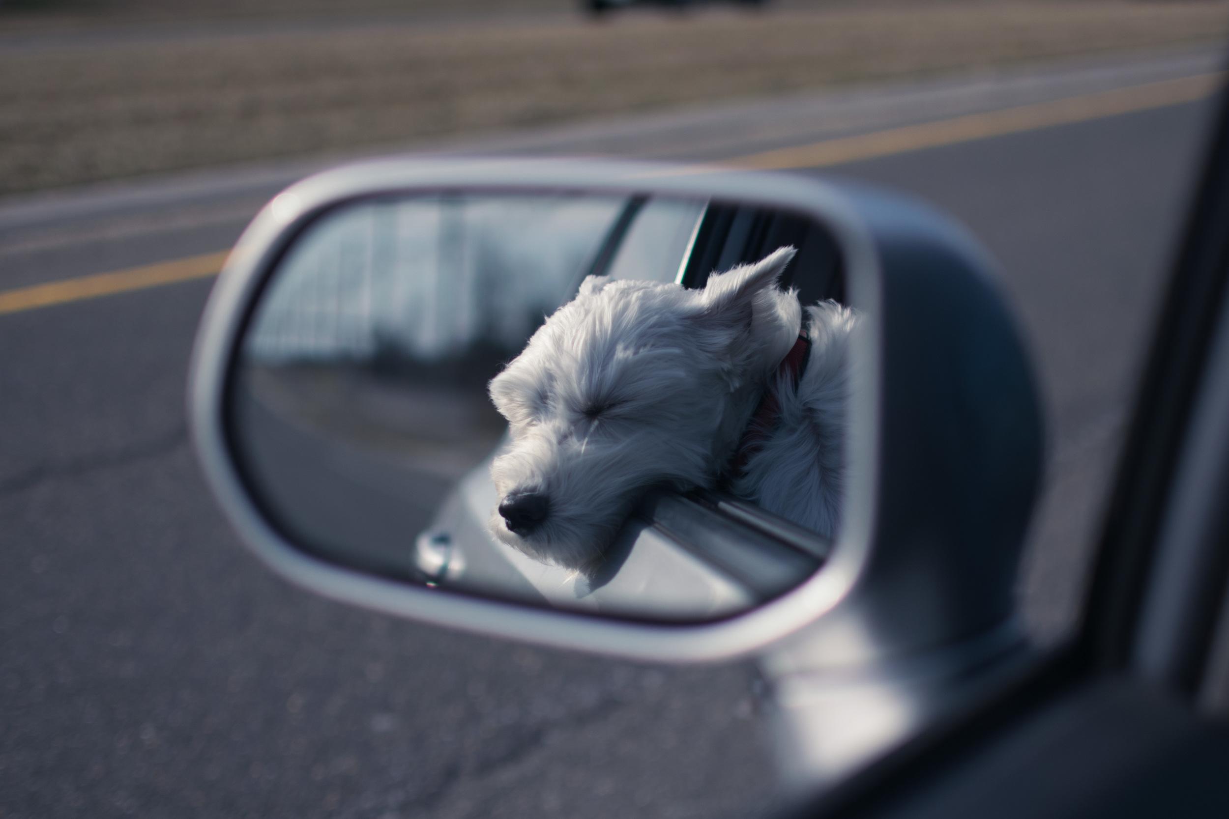 Driving with my buddy Herschel in Virginia.
