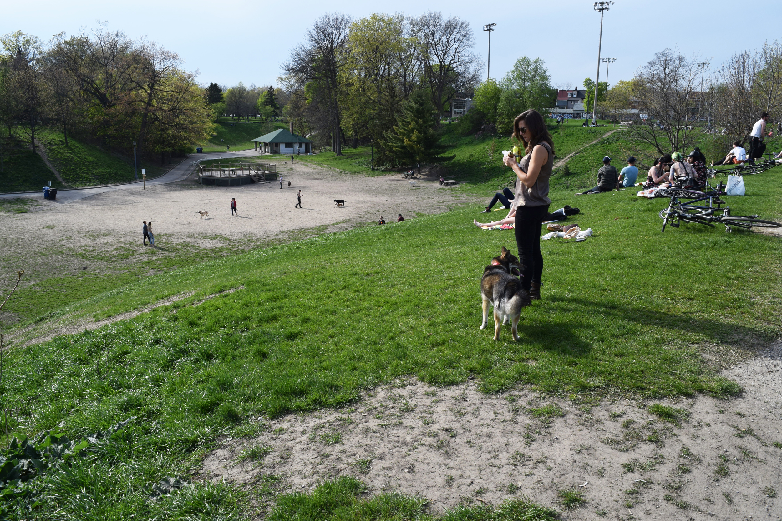 The Dog Bowl in Trinity Bellwoods Park (photograph by John Severino)