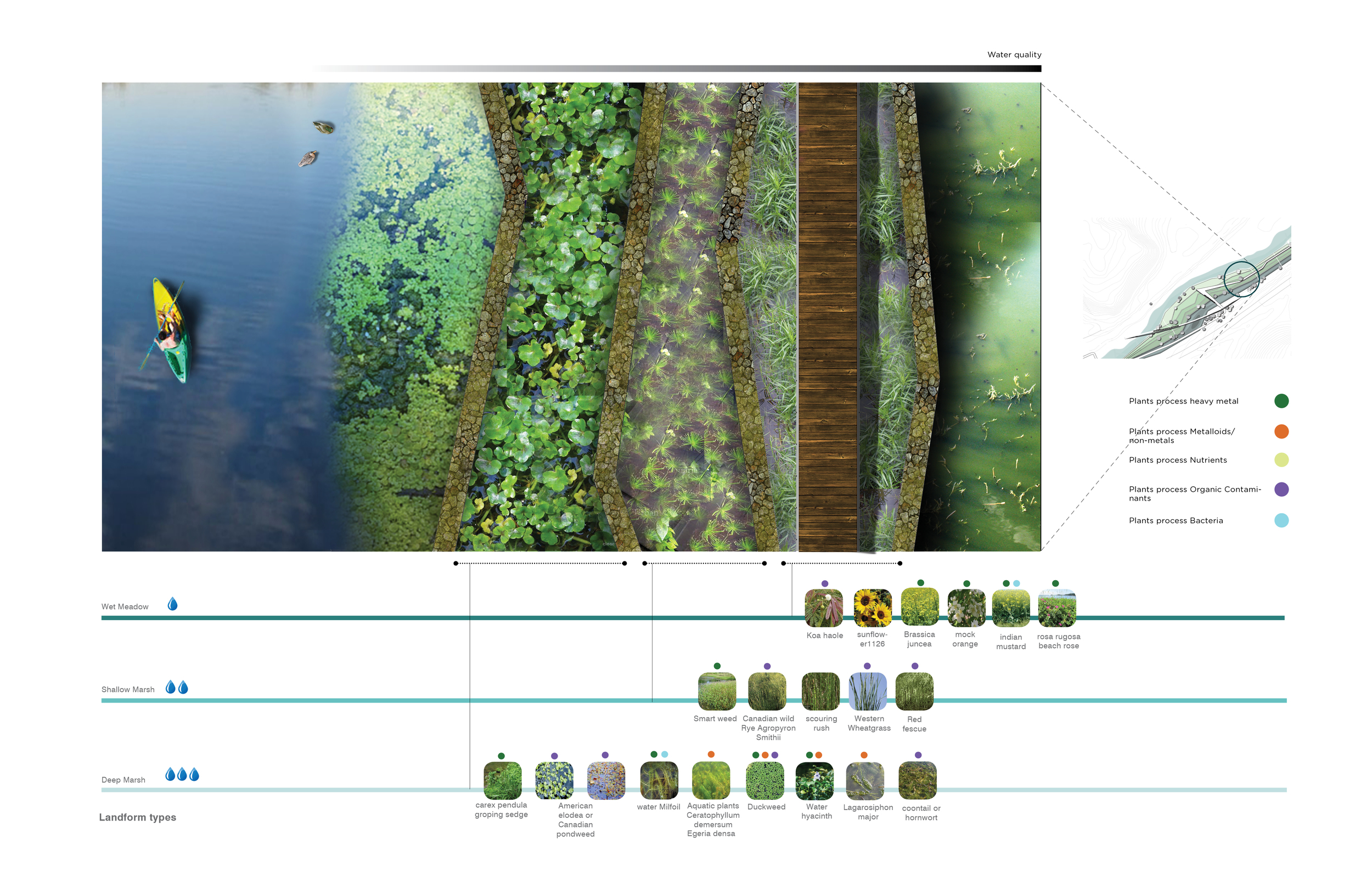 Figure 9: Configuration of the proposed constructed wetlands/bioremediation cells. Each type of plants processes certain type water pollution.